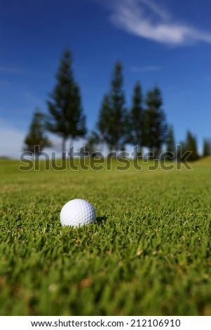 Golf ball on the golf course  with pine tree and blue sky