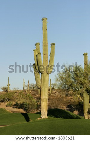 Golf course cactus