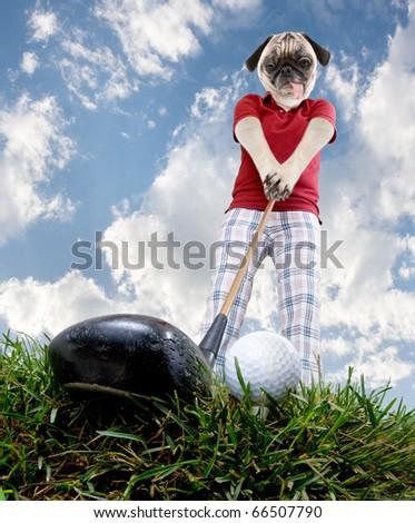 golf pug