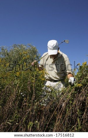Golfer searches for golf ball in deep rough.