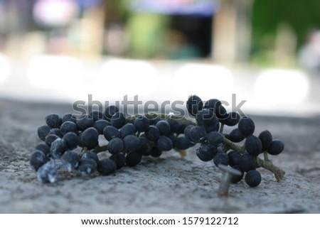 good freshly picked black berries