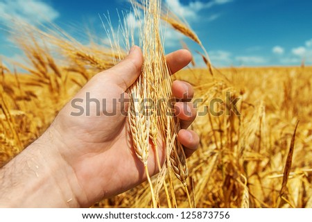 good harvest in farmers hand