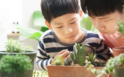 Good looking Asian kids look closely at pot of various species of cactus and other houseplants they grow with attention, curiosity and care. Nature education, Montessori and observation skills concept