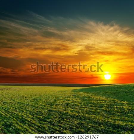 good sunset and green grass