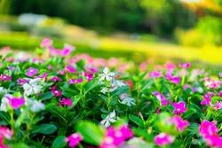 Goodmorning Garden flowers beautifull in Holiday