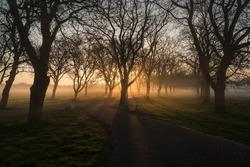 Goodmorning sunshine.  Nuts avenue estate Marienwaerdt in the area Betuwe Holland The Netherlands