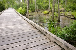 Goose Creek State Park Boardwalk