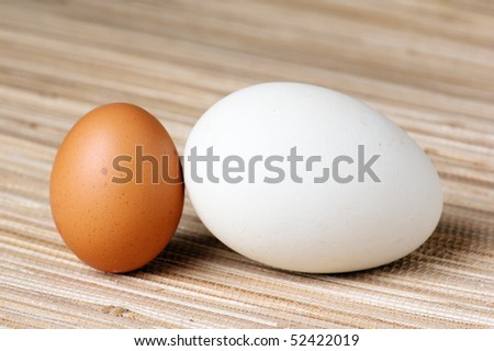 Goose egg and egg - stock photo