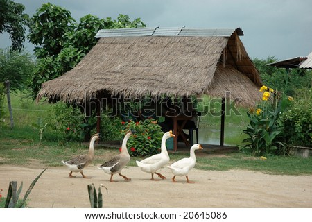 Goose Family Hut