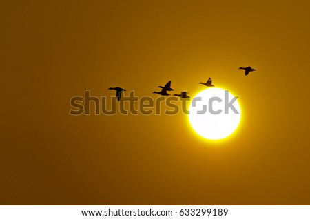 Goose flying past setting sun