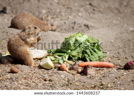gopher eats vegetables at the zoo