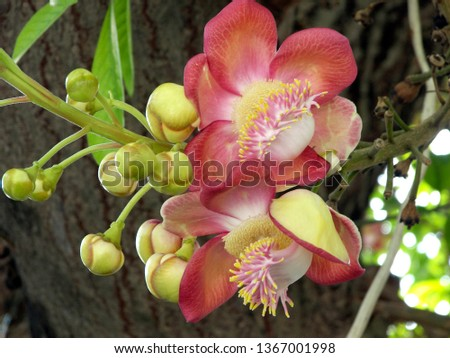 Gorgeous blooming orchid in the wild, Krabi, Thailand, Southeast Asia, Asia
