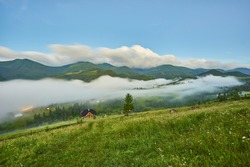gorgeous foggy sunrise in Carpathian mountains. lovely summer landscape of Volovets district. purple flowers on grassy meadows and forested hill in fog. mountain Pikui in the distance.