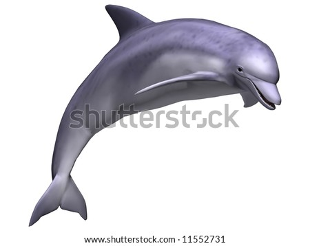Gorgeous leaping dolphin isolated on white - stock photo