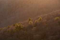 Gorgeous morning light glowing off of the pines in Shenandoah National Park during the Winter at sunrise.