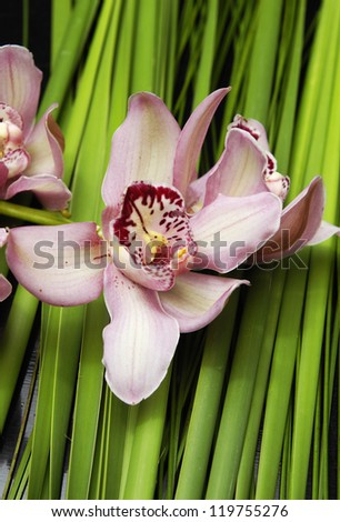 Gorgeous orchid with palm leaf-close up