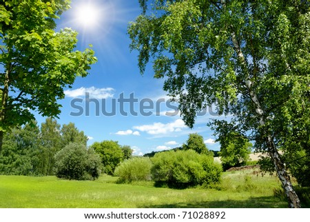 Gorgeous summer landscape bordered with trees at nice sunny weather #71028892