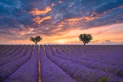 Gorgeous summer nature landscape. Blooming lavender flowers under colorful sunset sky, amazing nature landscape scenic. Idyllic, relaxing Provence vivid floral field, beauty in nature inspire concept