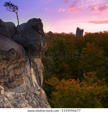 gorgeous sunset landscape, cliff with alone tree on background autumn beech forest, scenic colorful image, wonderful atmosphere of nature, Dovbush rocks, Carpathian mountains, Ukraine, Europe