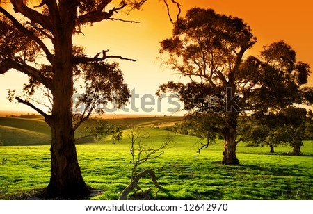 Gorgeous sunset over a lush green meadow