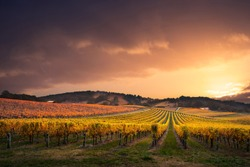 Gorgeous Sunset over a South Australian vineyard