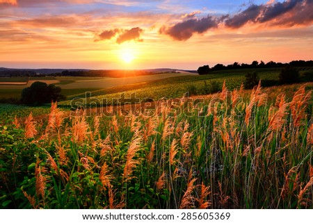 Gorgeous sunset with the sun flooding the landscape\'s vegetation in red and warm colors, vibrant sky and rural hills