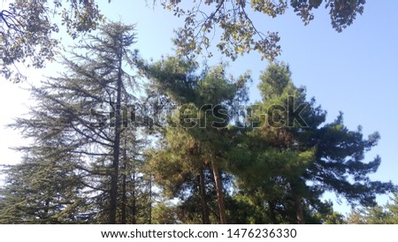 gorgeous view gorgeous view a large pine root face extending pine #1476236330