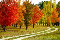 Gorgeous view of  colorful red, yellow, and orange maple trees in autumn season on green grass between curve dirt road with cloudy sky  in Central Otago of South Island, New Zealand.
