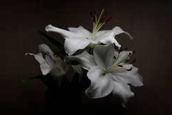gorgeous white lily in a dark room