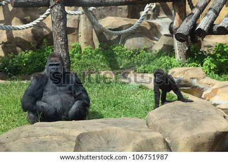 Gorilla and baby sitting on the grass at the zoo