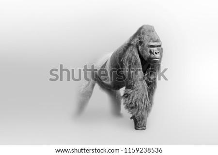 Gorilla wildlife art collection white edition, animal grayscale wallpaper #1159238536