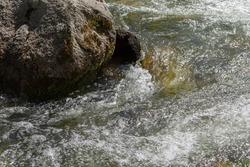 Gorny Altai, Russia. Small but rough mountain river