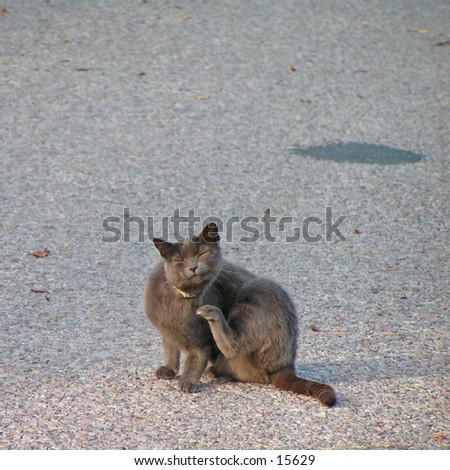 Got fleas?
