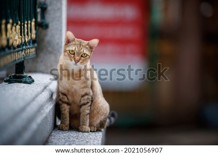 Gourami cat sat on the edge of the fence in relief. Stok fotoğraf ©