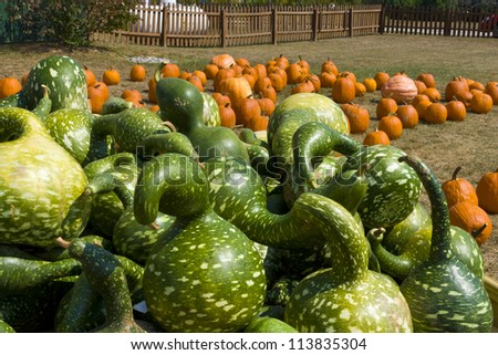 Gourds, Pumpkins and Squashes on autumn market