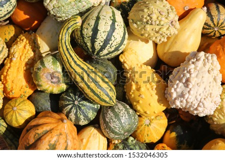 Gourds. Various types, sizes and varieties of Gourds for sale at a Farmers Market. Colorful Gourds for sale.  Foto stock ©