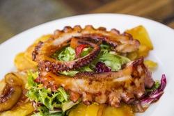 Gourmet tasty colorful octopus salad