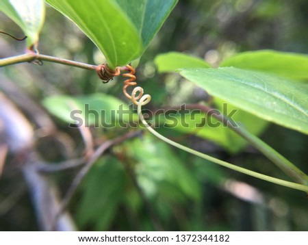 Graceful curling tendrils in South Miami Foto stock ©
