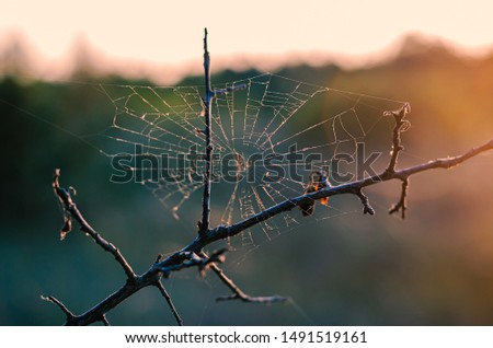 Graceful dry tree branch with cobwebs in the sunset sunshine. Pink and purple highlights on thin threads. Close-up. Eye level shooting. Soft focus. Horizontal photo layout. #1491519161