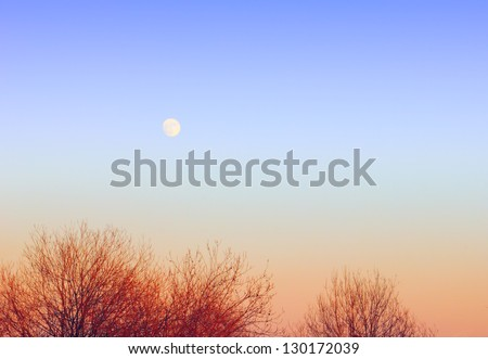 Gracefull nature background - clear blue sky and full moon over tree tops at evening