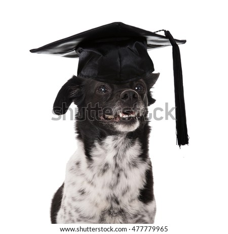 Best Graduation Cap Black Adorable Dog - stock-photo-graduated-dog-wearing-mortar-board-over-white-background-477779965  Gallery_167463  .jpg