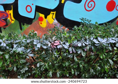 Graffiti wall and hedge with spray painted leaves abstract urban background. #240694723