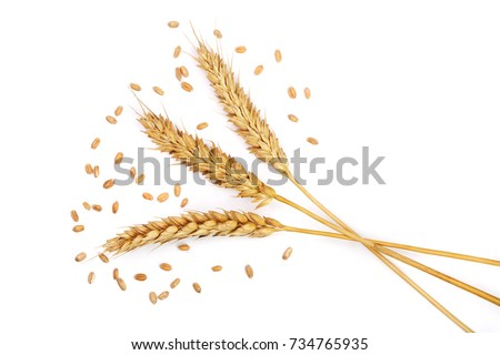 grain and ears of wheat isolated on white background. Top view #734765935