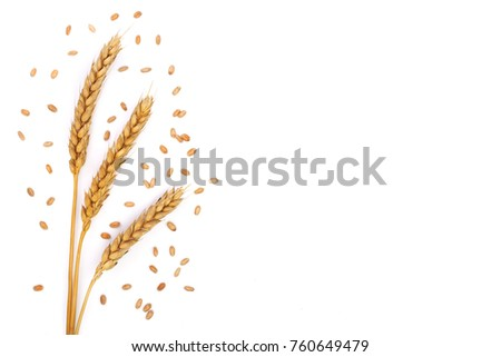 grain and ears of wheat isolated on white background with copy space for your text. Top view. Flat lay pattern