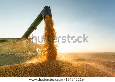 Grain auger of combine pouring soy bean into tractor trailer Stock photo ©