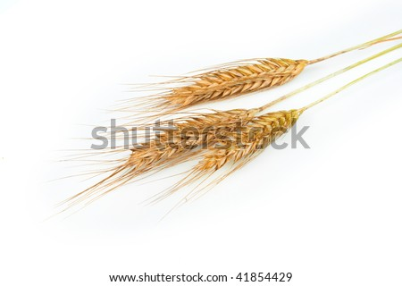 Grain ears - stock photo