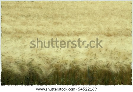 grain field as background