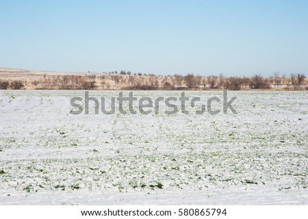 Grain field covered by snow in winter
