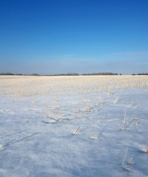 Grain field harvested in the fall emerges from  the winters snow  as spring temperatures warm the Canadian Prairies.