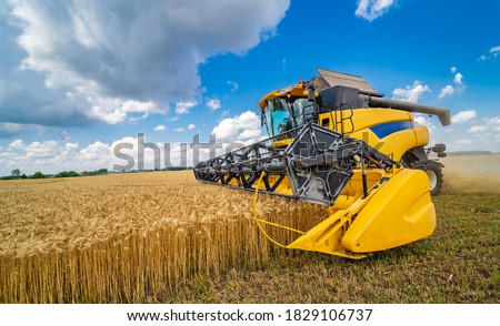 Grain harvesting combine in a sunny day. Yellow field with grain. Agricultural technic works in field. Сток-фото ©